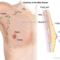 Where Are My Lymph Nodes Diagram Kicker Wiring General Surgery Male Breast Cancer Enlarge