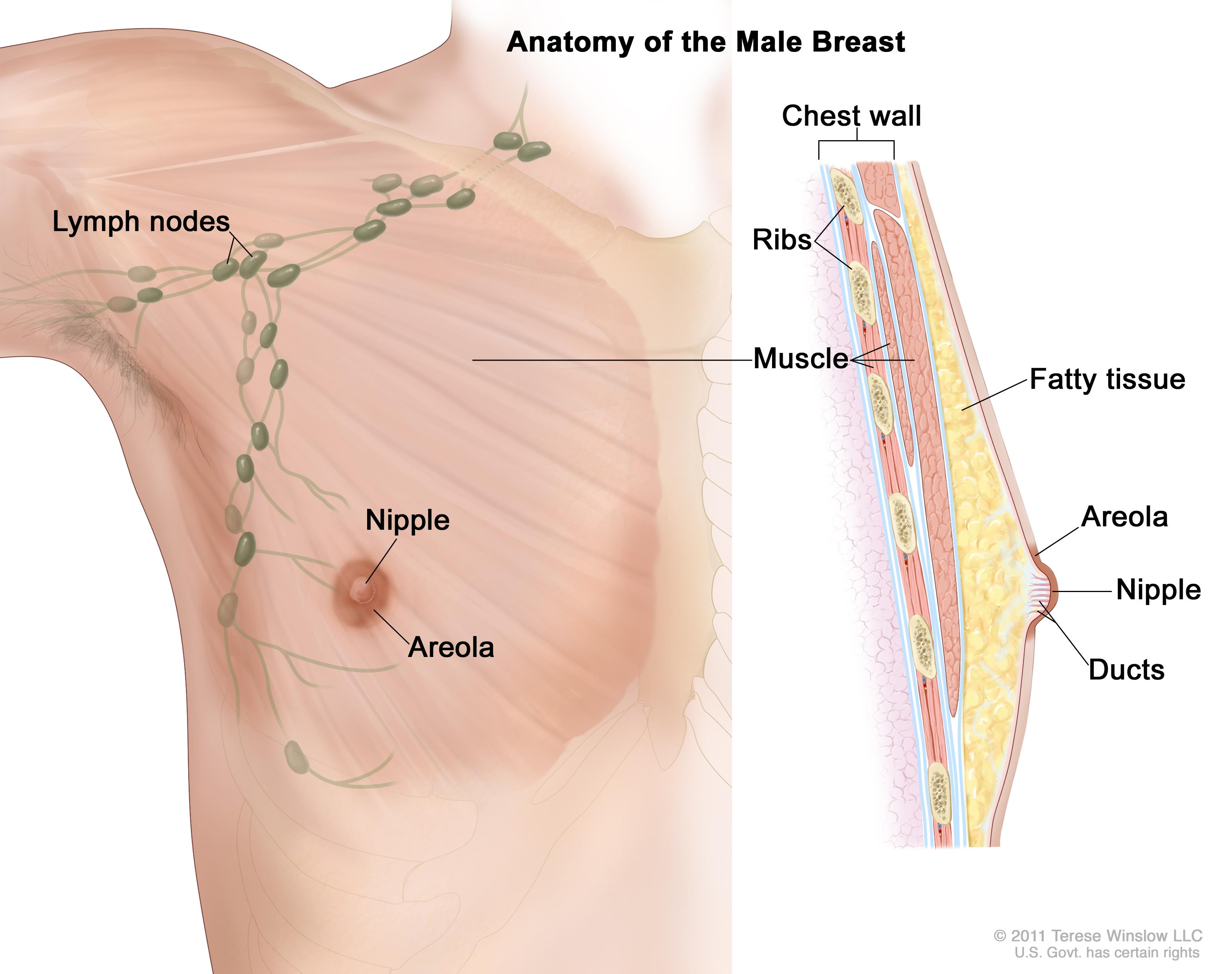 where are my lymph nodes diagram columbian exchange general surgery male breast cancer enlarge