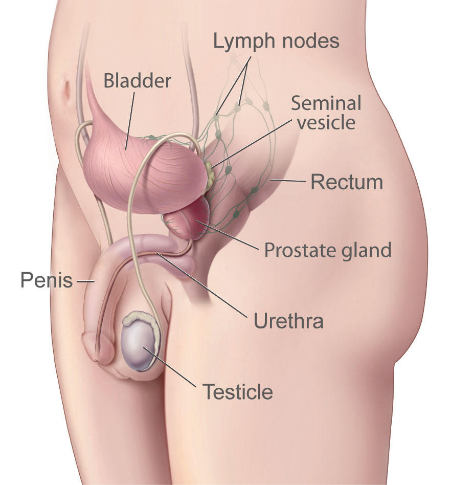 hight resolution of about the prostate