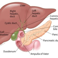 Gallbladder Location Diagram Wiring For A Doorbell Uk What Is Bile Duct Cancer Illustration Showing The Of Common Liver Pancreas Pancreatic