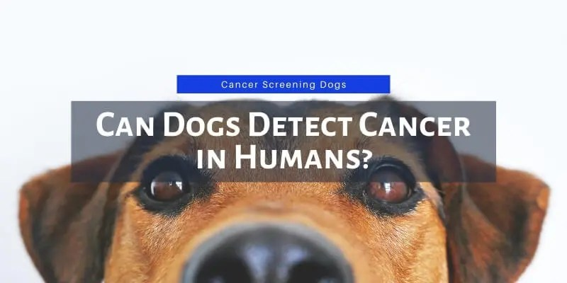 can dogs detect cancer in humans