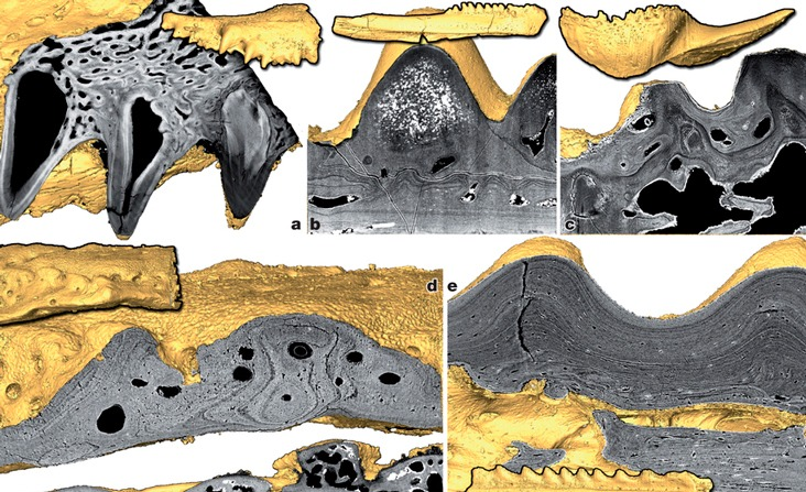 The Surprising Origin of Teeth! Dental research discovery!