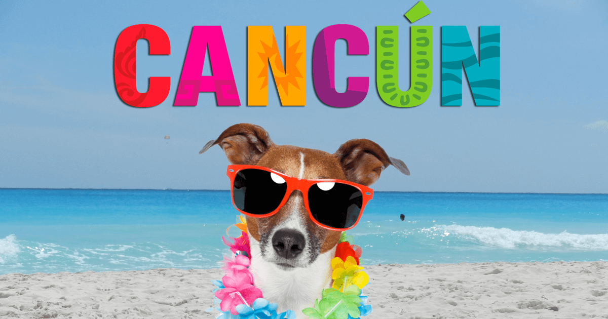 Pet Friendly Hotels in Cancun