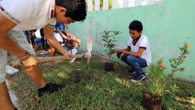 Photo of Realizan jornada de reforestación en Telesecundaria de Puerto Morelos