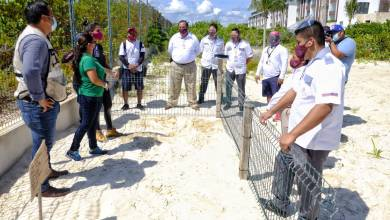 Photo of Hoteleros colocan corral para nidos de quelonios en Isla Mujeres