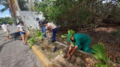 Photo of Reforestan el acceso a la Tortugranja con plantas nativas
