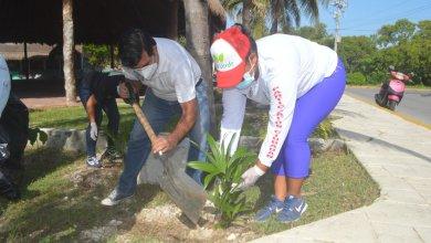 Photo of Continúa reforestación en espacios públicos de Isla Mujeres