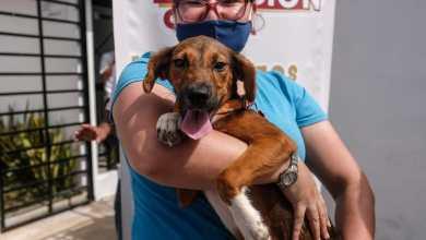 Photo of Promueven en Cancún la adopción de mascotas