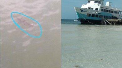 Photo of Protección Civil confirma avistamiento de cocodrilos en Playa Langosta