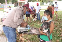 Photo of Anuncian Jornada de Vacunación Antirrábica en Quintana Roo