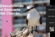 Photo of Promueven la preservación de Charranes en Isla Mujeres