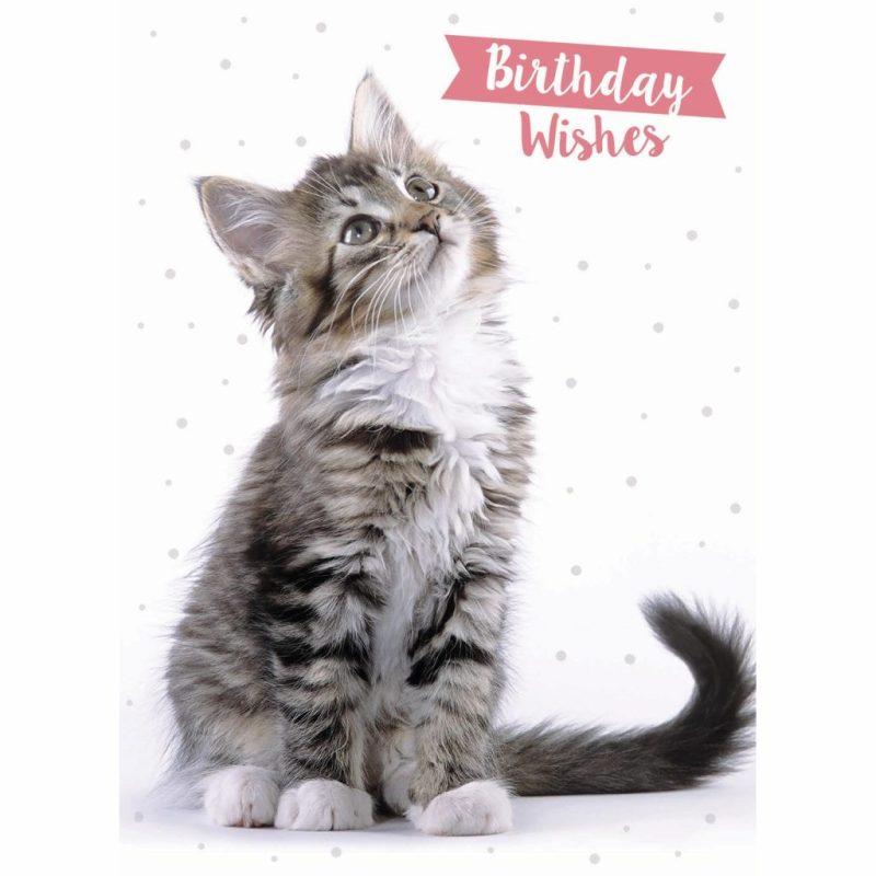 animal birthday card tab cat birthday wishes