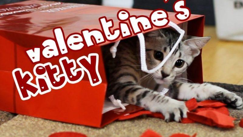 valentines kitty free happy valentines day ecards
