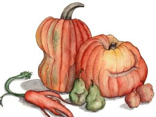 Hand-drawn food illustrations