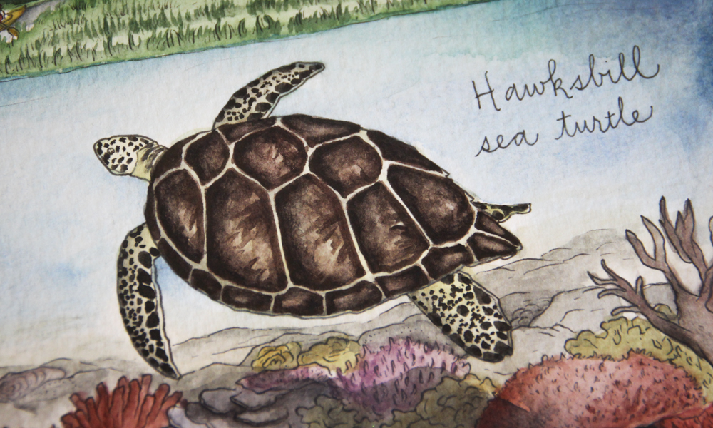 Earth Day 2017: An illustrated celebration of our greater world