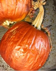 Honey-Ginger Pumpkin Pie