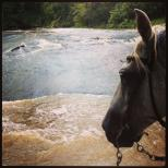 Greybar_river