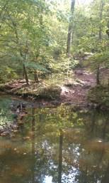 Clifton pond