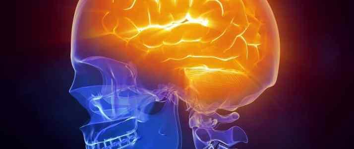 Brain inside Xray