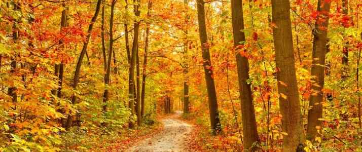 Path Through Woodland in Autumn