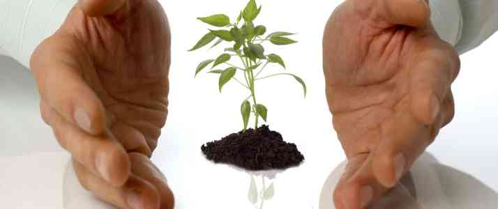 Hands around Small Plant