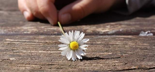 daisy flower held by childs hand