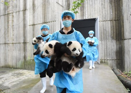 localhost_2015candelaestereo1_images_panda2