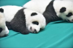 localhost_2015candelaestereo1_images_panda4