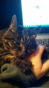 cassie snuggling at computer