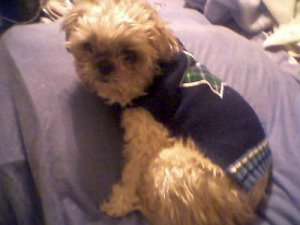 julio sweater