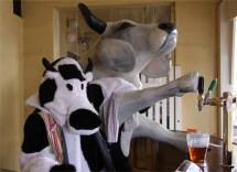 cowpub