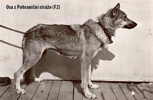 2) Odin z Pohrani�n� str�ze (F2, linea di Berta)