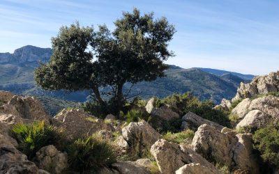 Hike Sa Cova de Dalt