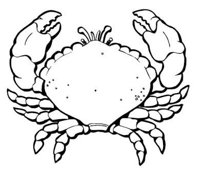 Dibujos de cangrejos » CANGREJOPEDIA