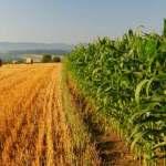 Agricoltura. M5S all'Ars: Bando regionale ristori è scritto male. Penalizza le piccole imprese e ne lascia fuori migliaia