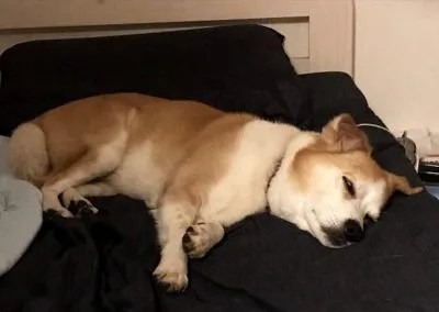 dogmind8-20-6