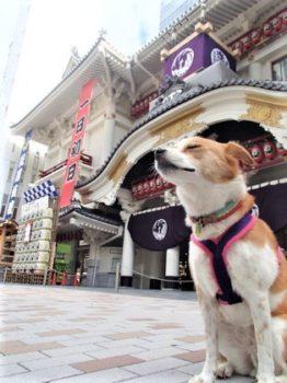 歌舞伎座前で記念撮影