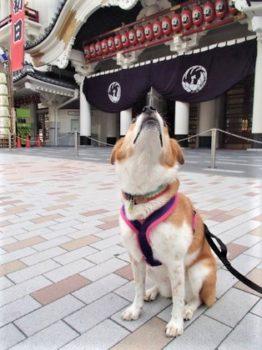 歌舞伎座前で空気チェック中