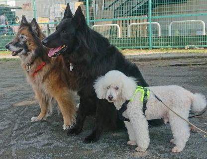 年長犬3頭