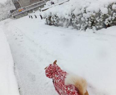 雪道を散歩中