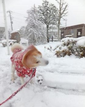 雪を振り払う