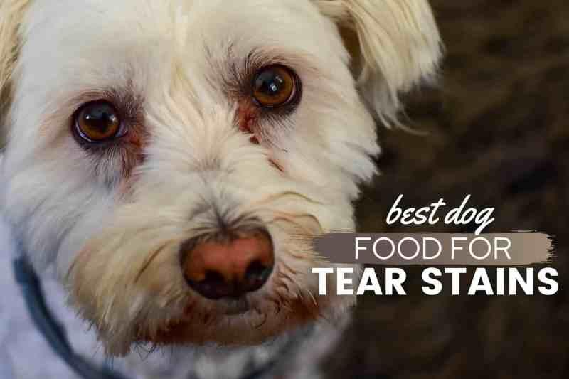 Best Dog Food For Tear Stains 2021 Get