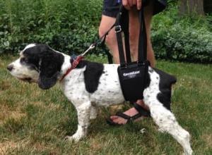 Dog and GingerLead sling