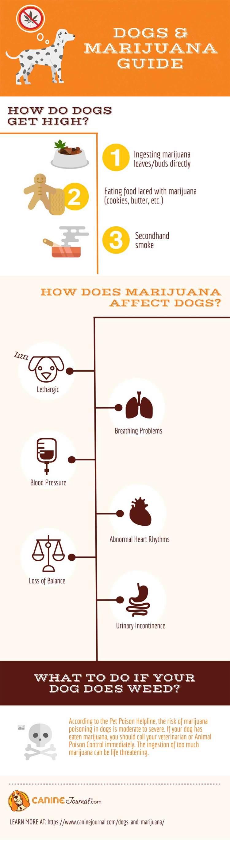 Dogs and Marijuana Infographic