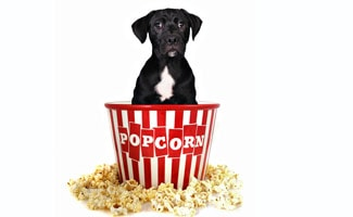 What Do I Do If My Dog Was Fed Popcorn?   CanineJournal.com
