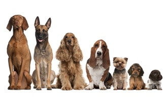 todas las razas de perro