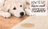 best way to get dog urine smell out of carpet