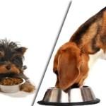 senior dog food secrets