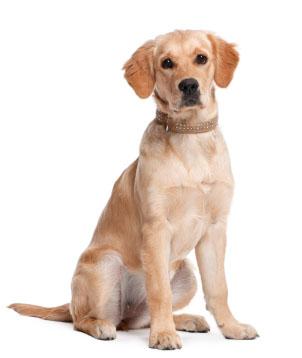 Dog Training, Dog Obedience Training and Dog Behavior Training