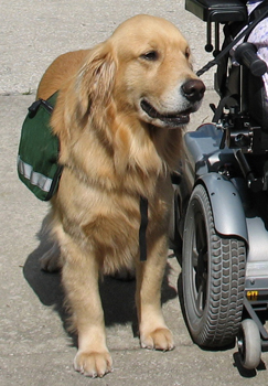 wheel chairs for dogs desk chair stylish wheelchair assistance stability service dog